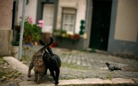 Papel de parede Casal de Gatos