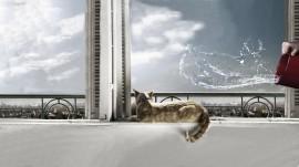 Papel de parede Gato na Janela Prestes a Ser Molhado