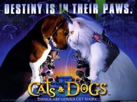 Papel de parede Como Cães e Gatos – Filme