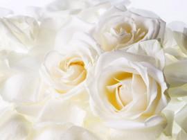 Papel de parede Rosas Brancas