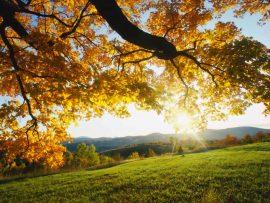 Papel de parede Árvore ao amanhecer