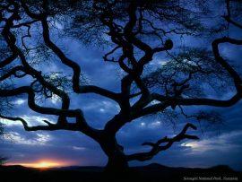 Papel de parede Árvore ao por-do-sol
