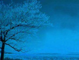 Papel de parede Árvore azul