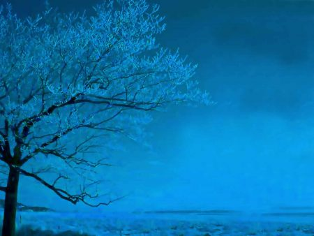 Papel de parede Árvore azul para download gratuito. Use no computador pc, mac, macbook, celular, smartphone, iPhone, onde quiser!