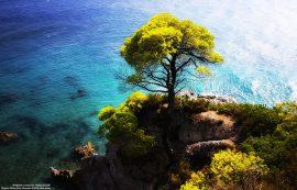 Papel de parede Árvore do penhasco