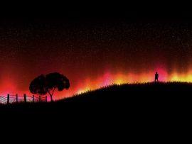 Papel de parede Árvore e a Aurora Boreau