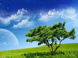 Papel de parede Árvore e a Lua