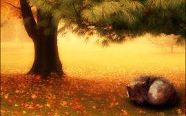 Papel de parede Árvore e o Lobo