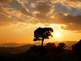 Papel de parede Árvore e o Sol