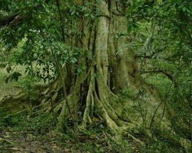 Papel de parede Árvore gloriosa