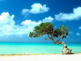 Papel de parede Árvore na Praia