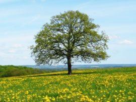 Papel de parede Árvore na primavera