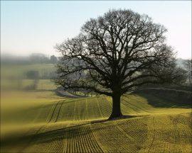 Papel de parede Árvore no campo