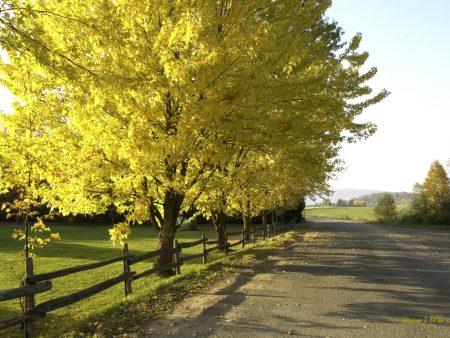 Papel de parede Árvore no Outono para download gratuito. Use no computador pc, mac, macbook, celular, smartphone, iPhone, onde quiser!