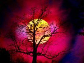 Papel de parede Árvore no Pôr do Sol