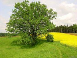 Papel de parede Árvore verde