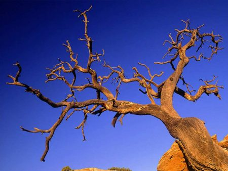 Papel de parede Árvore para download gratuito. Use no computador pc, mac, macbook, celular, smartphone, iPhone, onde quiser!