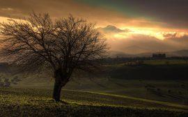 Papel de parede Árvores e a montanha iluminada