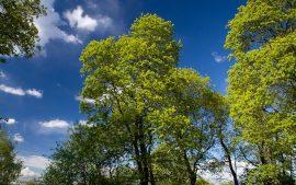 Papel de parede Árvores Verdes