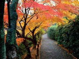 Papel de parede Japão – Cores de Outono