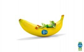 Papel de parede Banana e Sapinho