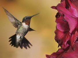Papel de parede Beija-Flor – Delicado