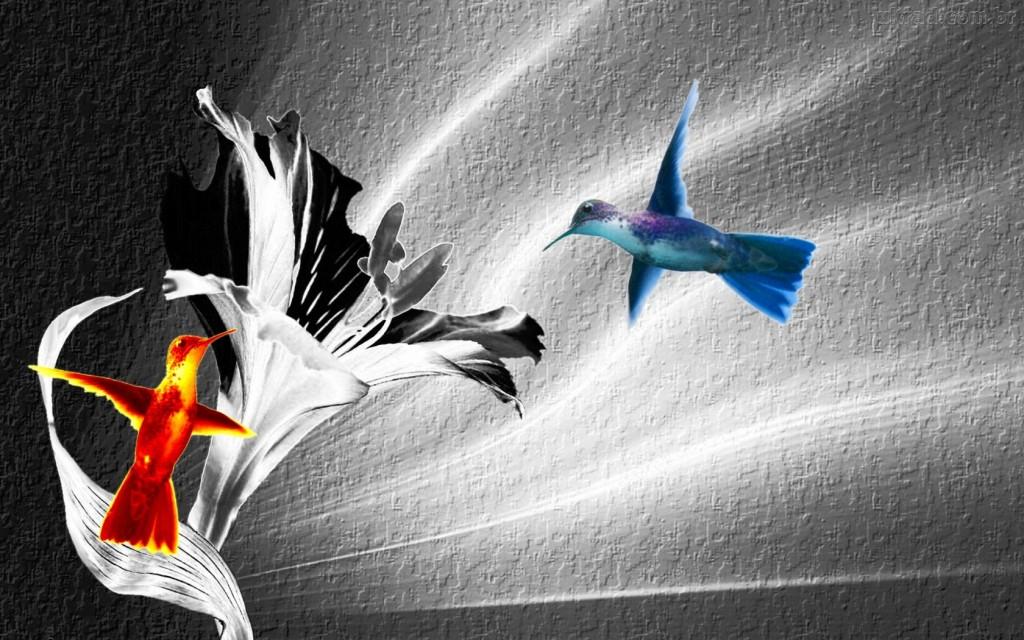 Papel de parede Beija-Flor – Beleza para download gratuito. Use no computador pc, mac, macbook, celular, smartphone, iPhone, onde quiser!
