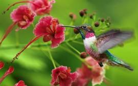 Papel de parede Beija-Flor e a Flor