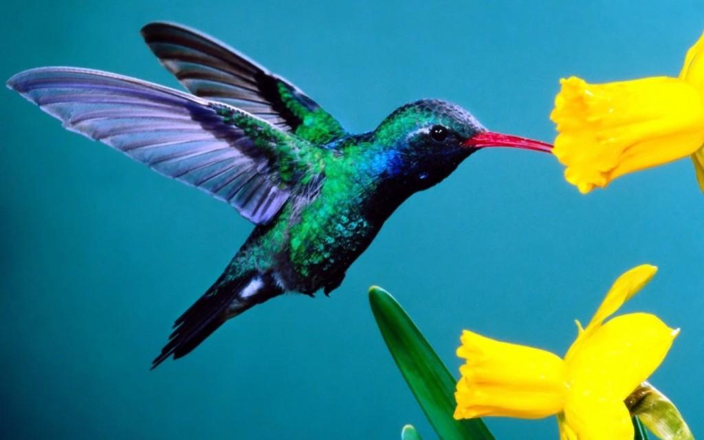 Papel de parede Beija-Flor Multicolorido para download gratuito. Use no computador pc, mac, macbook, celular, smartphone, iPhone, onde quiser!