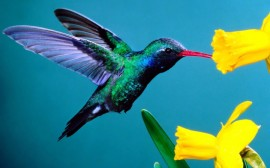 Papel de parede Beija-Flor Multicolorido