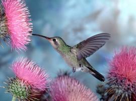 Papel de parede Beija-Flor – Passarinho