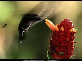 Papel de parede Beija-Flor – No Ar