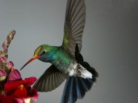 Papel de parede Beija-Flor – Na Flor