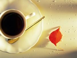 Papel de parede Café e Folha