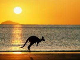 Papel de parede Canguru – Ao Por-do-Sol