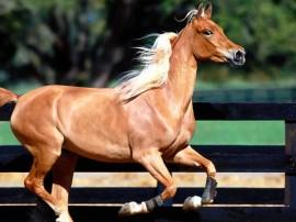 Papel de parede Cavalo – Rústico