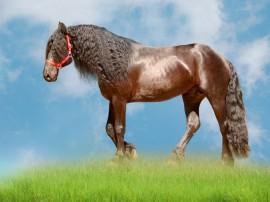 Papel de parede Cavalo – Crina Crespa