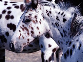 Papel de parede Cavalo – Pintado