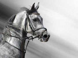 Papel de parede Cavalo – Belo