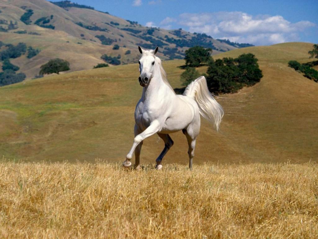 Papel de parede Cavalo – No Campo para download gratuito. Use no computador pc, mac, macbook, celular, smartphone, iPhone, onde quiser!