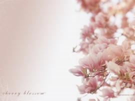 Papel de parede Cerejeiras Delicadas