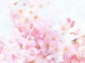 Papel de parede Belas Cerejeiras