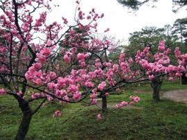 Papel de parede Cerejeira com Flores
