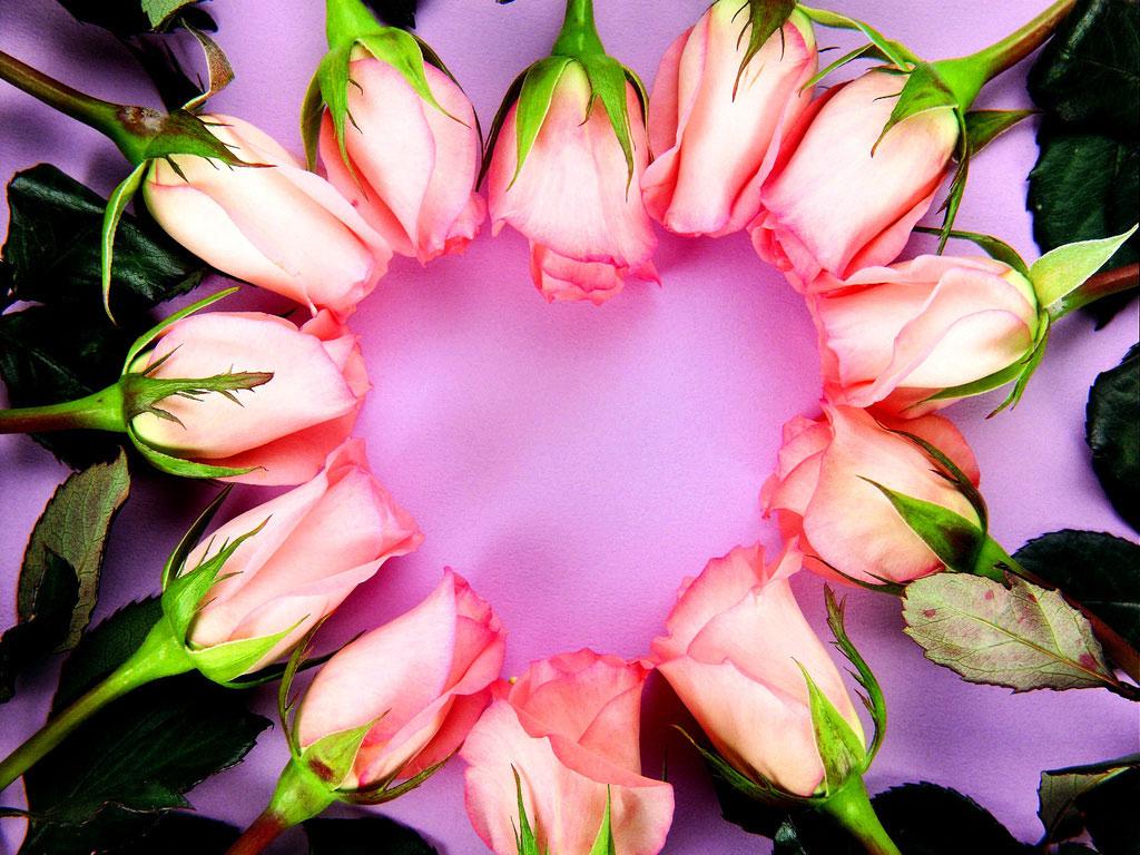 Papel de parede Coração – Rosas para download gratuito. Use no computador pc, mac, macbook, celular, smartphone, iPhone, onde quiser!