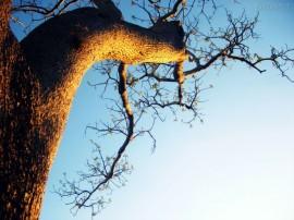 Papel de parede Entardecer e a Árvore