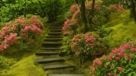 Papel de parede Escada – Natureza
