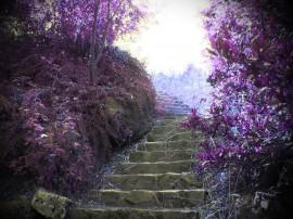 Papel de parede Escada – No Jardim