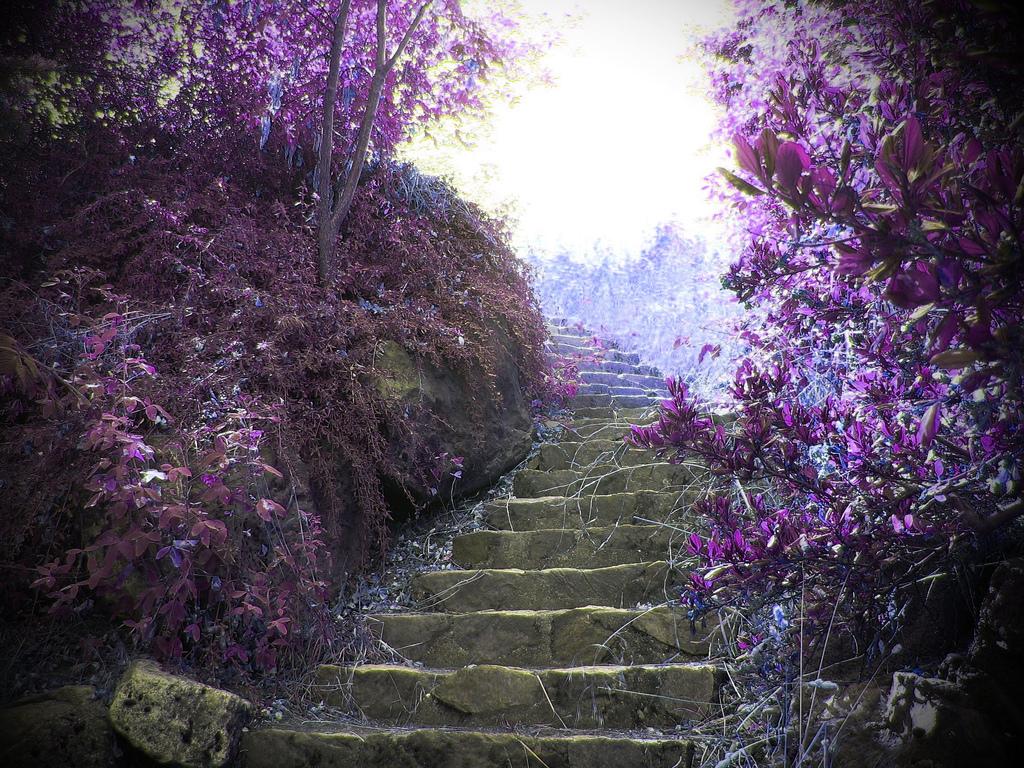 Papel de parede Escada – No Jardim para download gratuito. Use no computador pc, mac, macbook, celular, smartphone, iPhone, onde quiser!