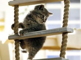 Papel de parede Escada – Gatinho
