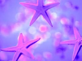 Papel de parede Estrelas do Mar
